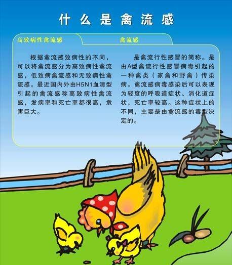 禽流感概念股一览